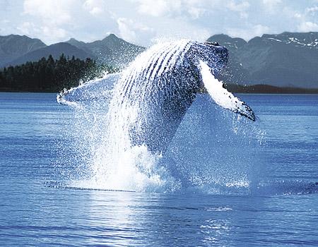 手抄报板块海洋动物