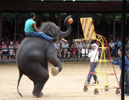 大象 动物 450_350