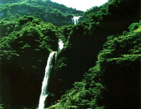 山脊上长满了千年古松,松树的根须皆攀崖而生,向人们展示其巨大的生命